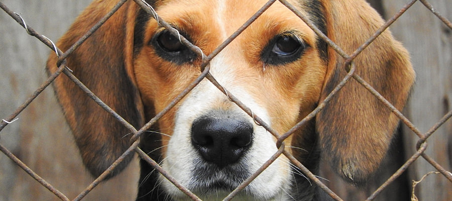 Injured by a Dog? What the Law Says About Dog Attack Injuries